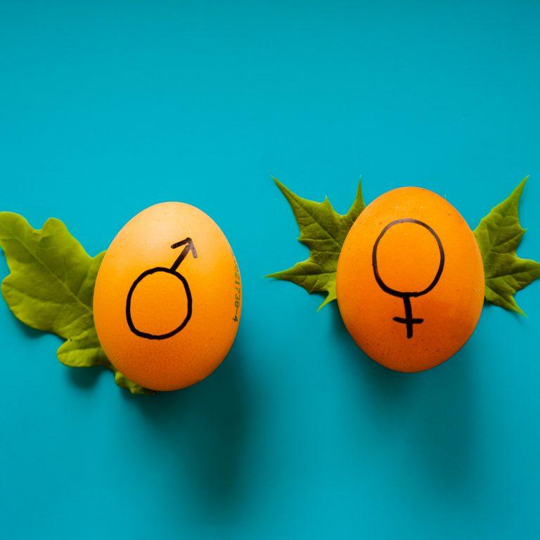 24 – Kjønnsforskjeller