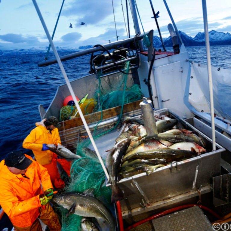 5.4 – Norwegian Seafood: Cod and Salmon